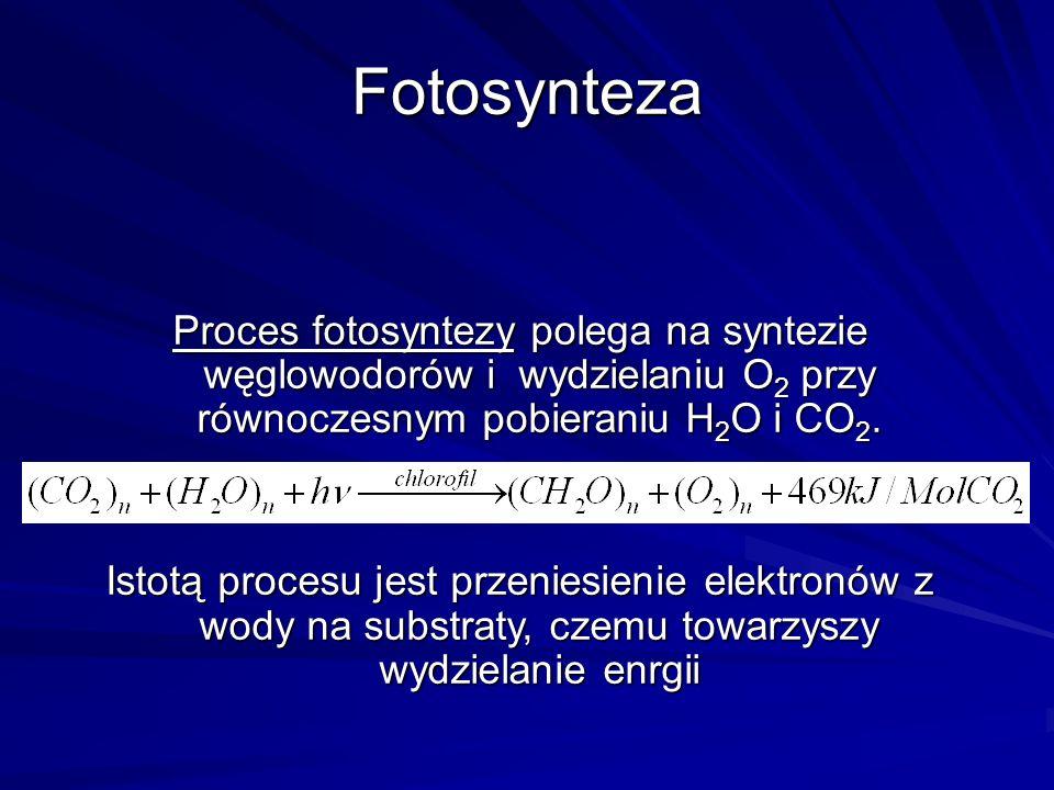 Fotosynteza Proces fotosyntezy polega na syntezie węglowodorów i wydzielaniu O2 przy równoczesnym pobieraniu H2O i CO2.