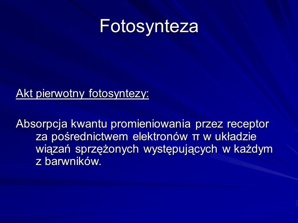 Fotosynteza Akt pierwotny fotosyntezy: