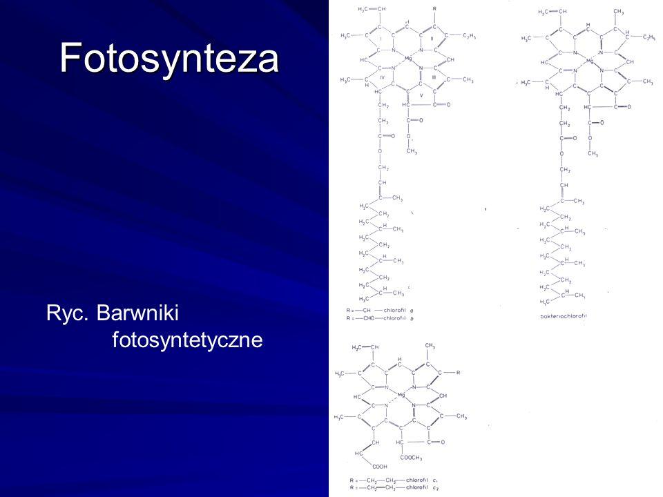 Fotosynteza Ryc. Barwniki fotosyntetyczne