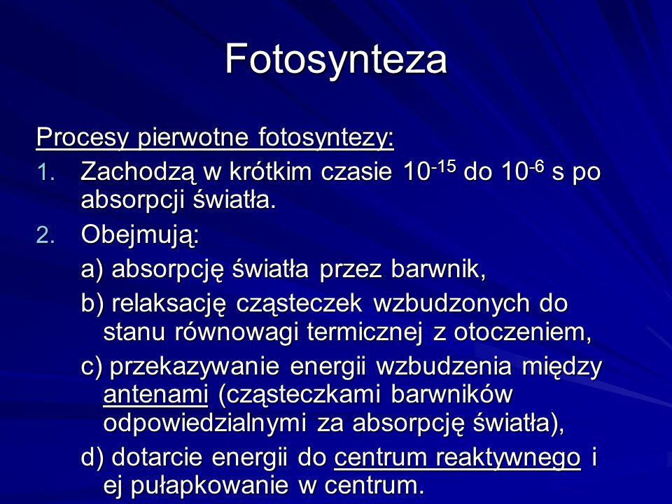 Fotosynteza Procesy pierwotne fotosyntezy: