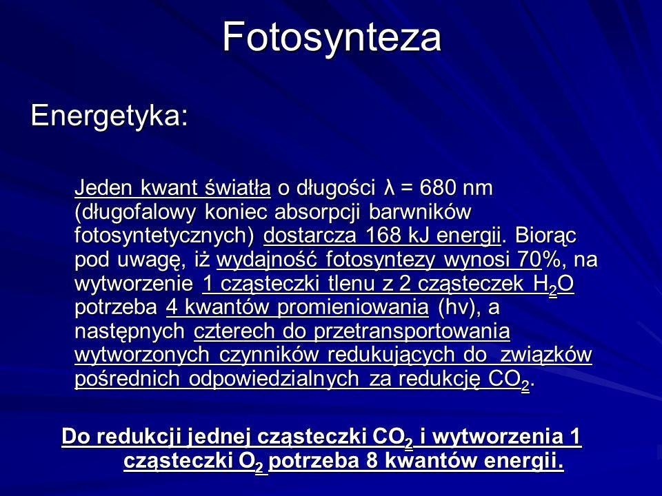 Fotosynteza Energetyka: