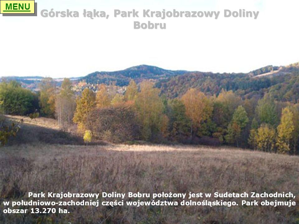 Górska łąka, Park Krajobrazowy Doliny Bobru