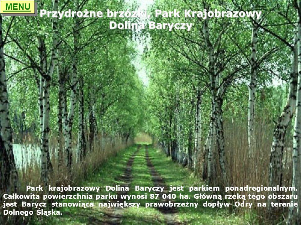 Przydrożne brzózki, Park Krajobrazowy Dolina Baryczy