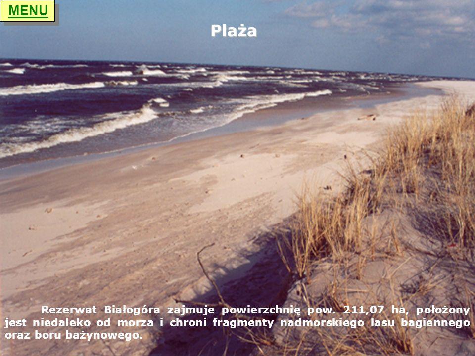 MENU Plaża.