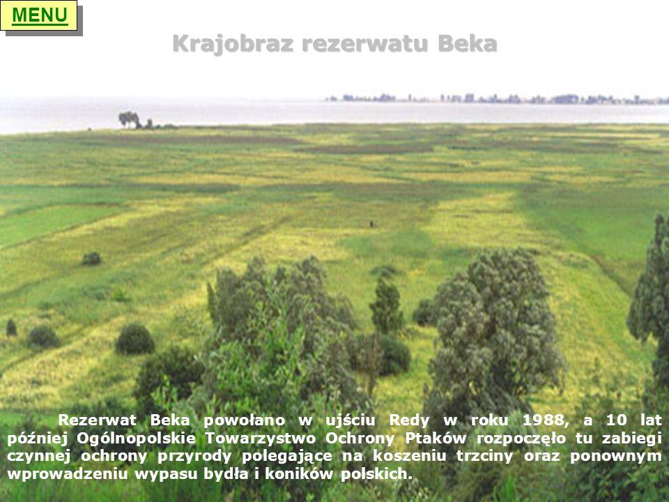 Krajobraz rezerwatu Beka