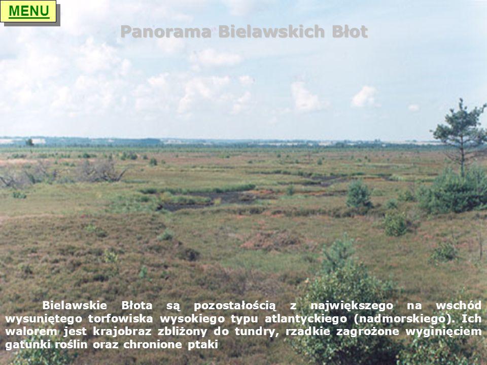 Panorama Bielawskich Błot