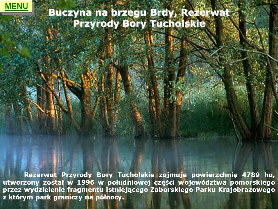 Buczyna na brzegu Brdy, Rezerwat Przyrody Bory Tucholskie
