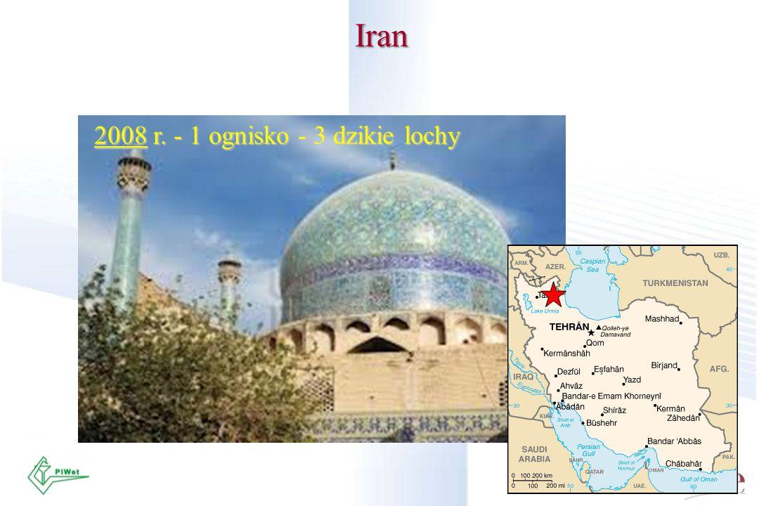 Iran 2008 r. - 1 ognisko - 3 dzikie lochy