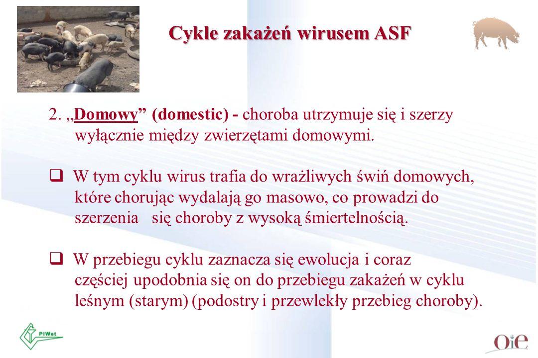 Cykle zakażeń wirusem ASF