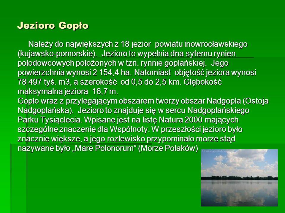 Jezioro GopłoNależy do największych z 18 jezior powiatu inowrocławskiego. (kujawsko-pomorskie). Jezioro to wypełnia dna sytemu rynien.