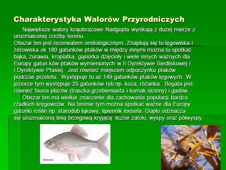 Charakterystyka Walorów Przyrodniczych