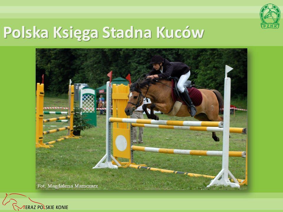 Polska Księga Stadna Kuców