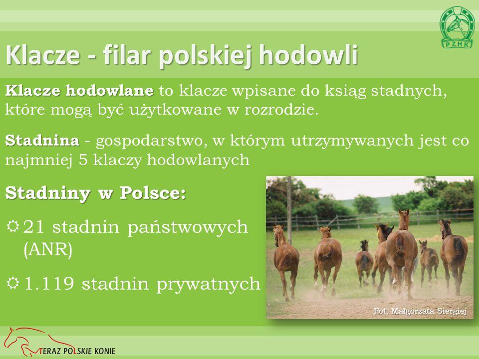 Klacze - filar polskiej hodowli