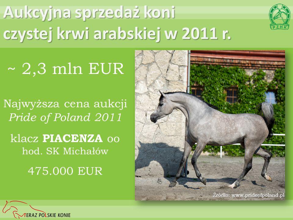 Aukcyjna sprzedaż koni czystej krwi arabskiej w 2011 r.
