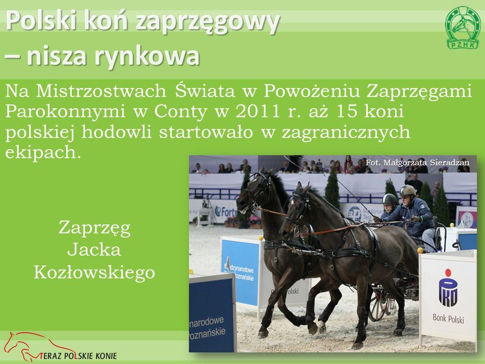 Polski koń zaprzęgowy – nisza rynkowa