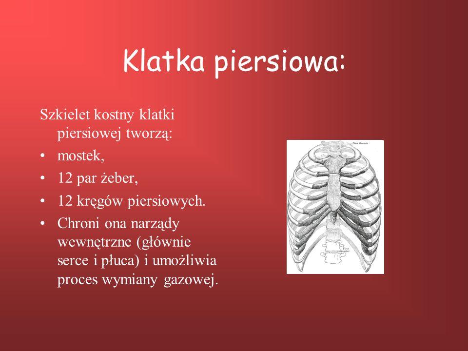 Klatka piersiowa: Szkielet kostny klatki piersiowej tworzą: mostek,