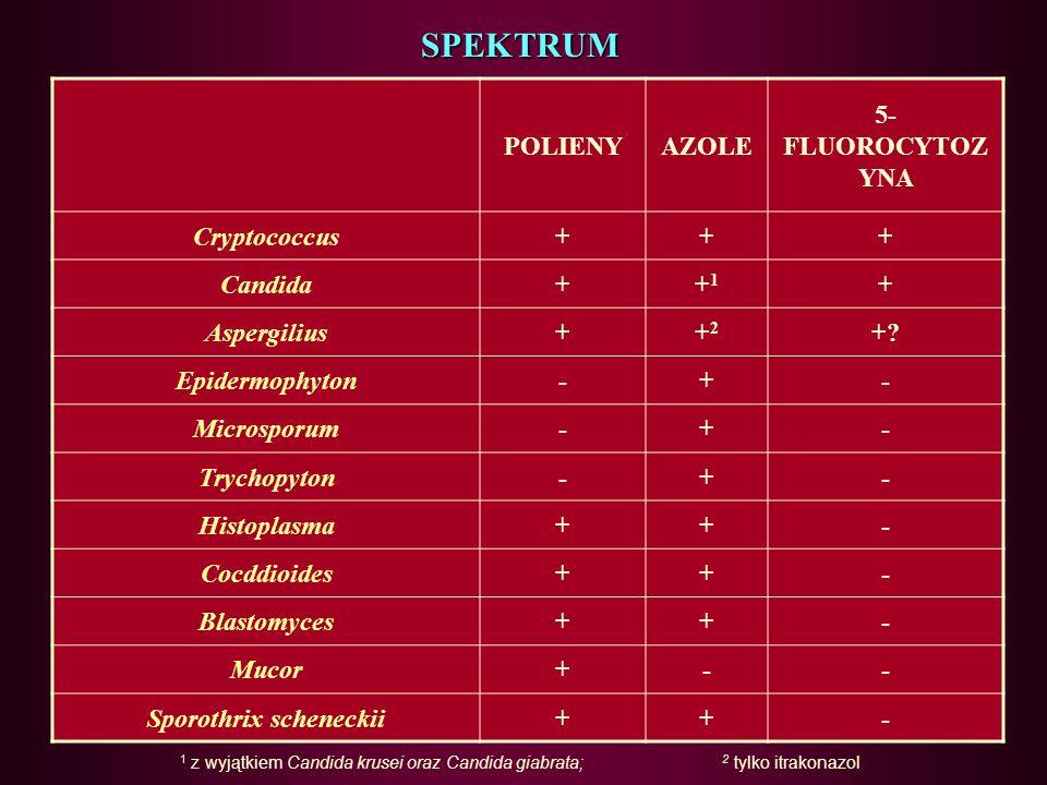 Sporothrix scheneckii