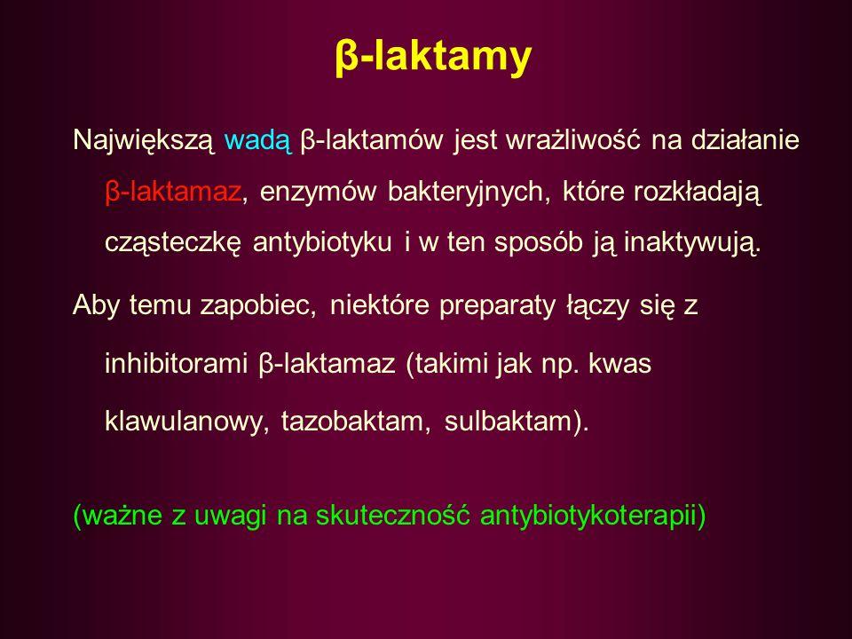 β-laktamy
