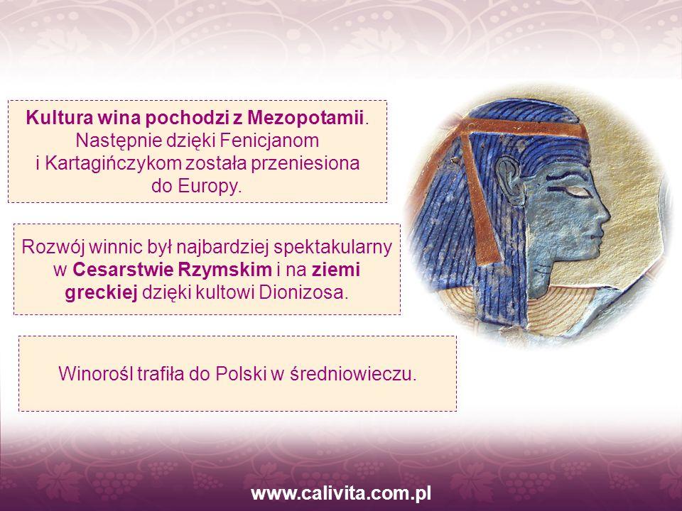 Winorośl trafiła do Polski w średniowieczu.