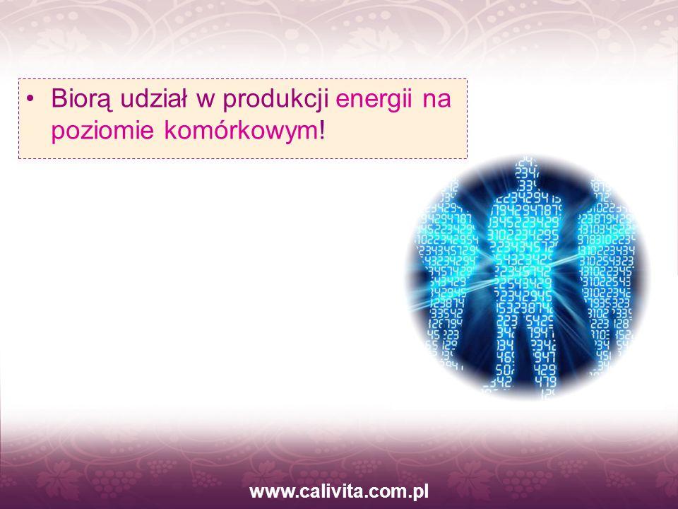 Biorą udział w produkcji energii na poziomie komórkowym!