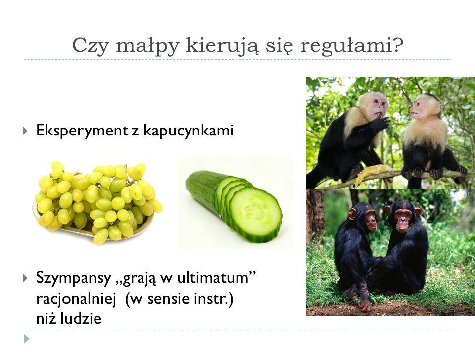 Czy małpy kierują się regułami