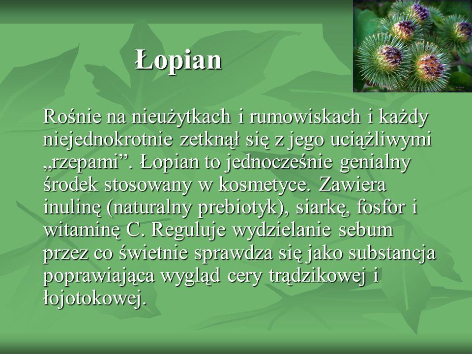 Łopian