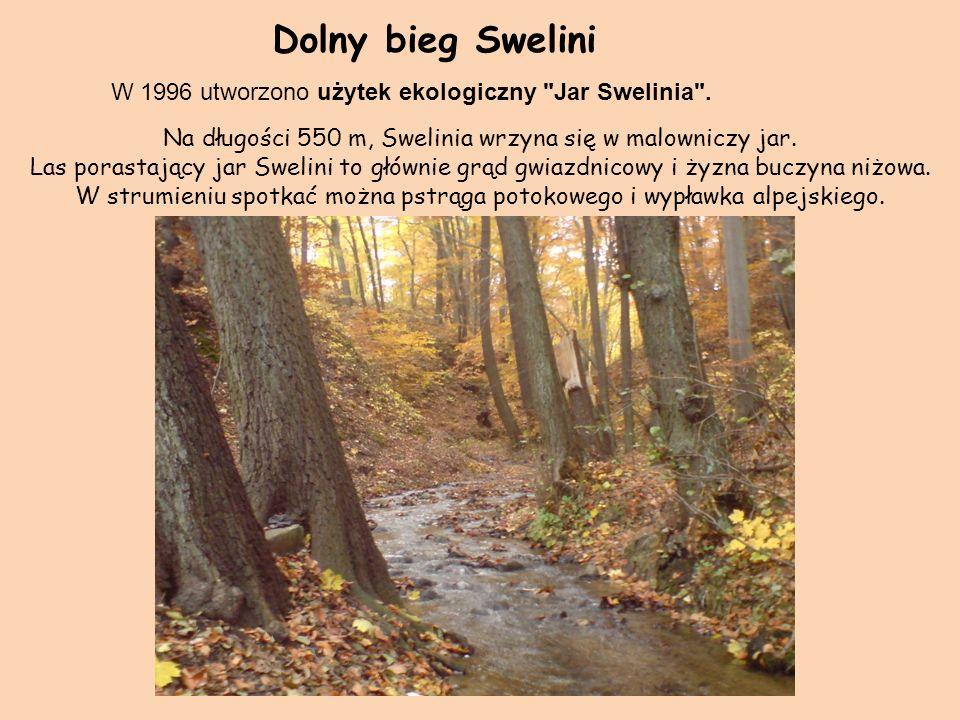 Dolny bieg Swelini W 1996 utworzono użytek ekologiczny Jar Swelinia .