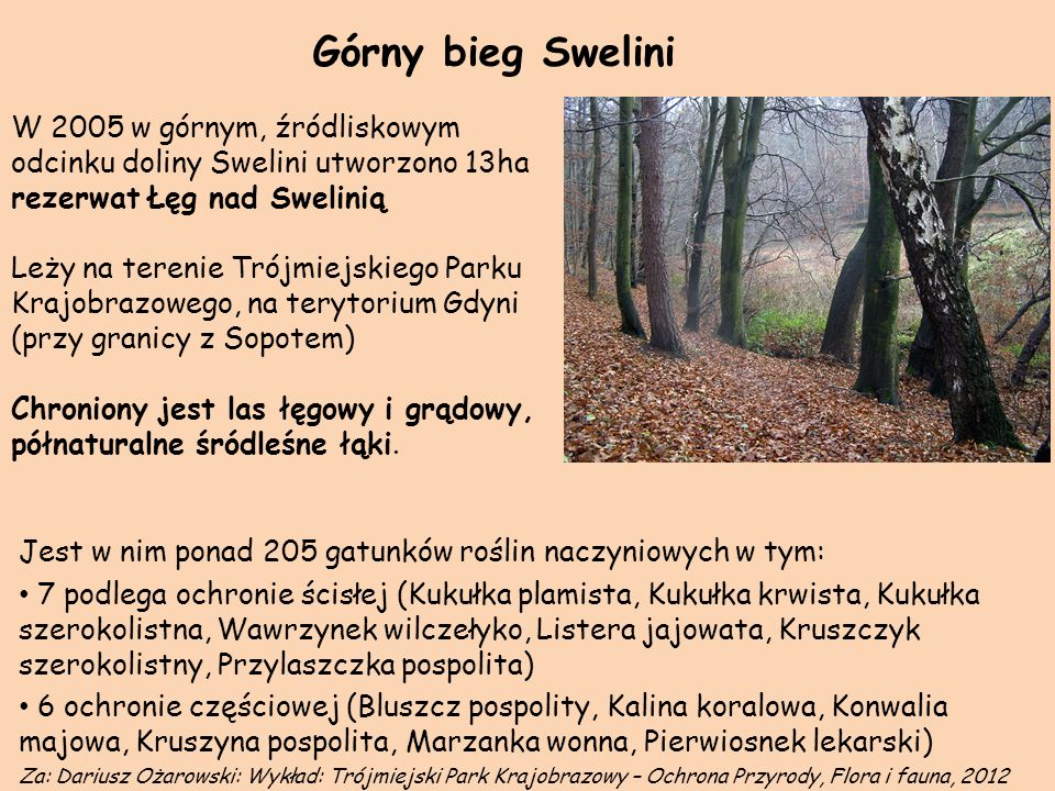 Górny bieg Swelini W 2005 w górnym, źródliskowym odcinku doliny Swelini utworzono 13ha rezerwat Łęg nad Swelinią.