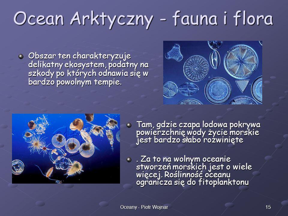 Ocean Arktyczny - fauna i flora