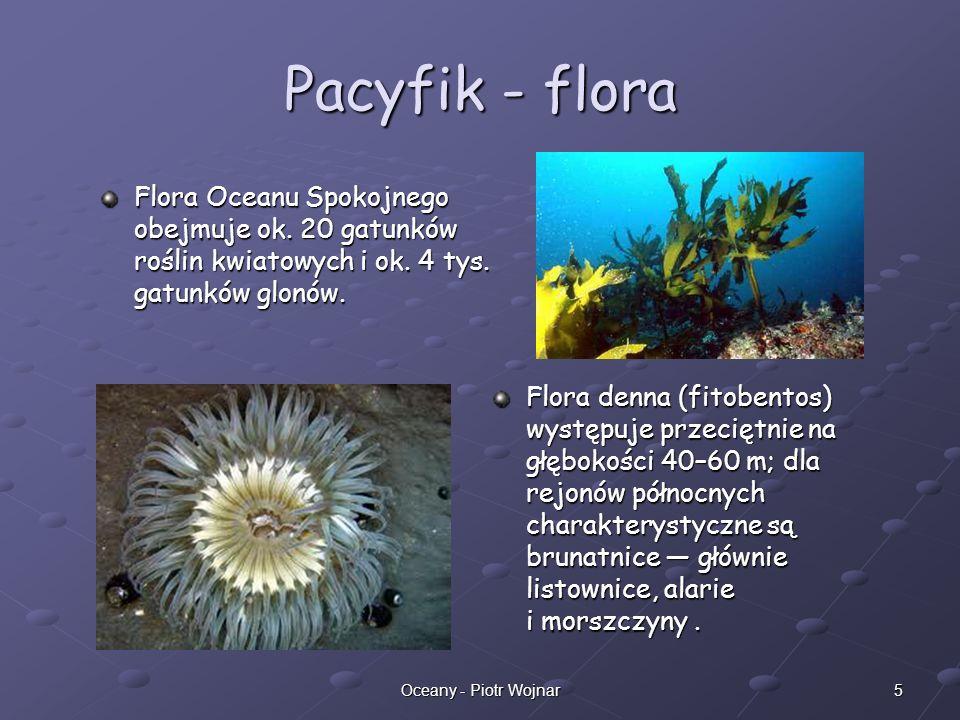 Pacyfik - floraFlora Oceanu Spokojnego obejmuje ok. 20 gatunków roślin kwiatowych i ok. 4 tys. gatunków glonów.