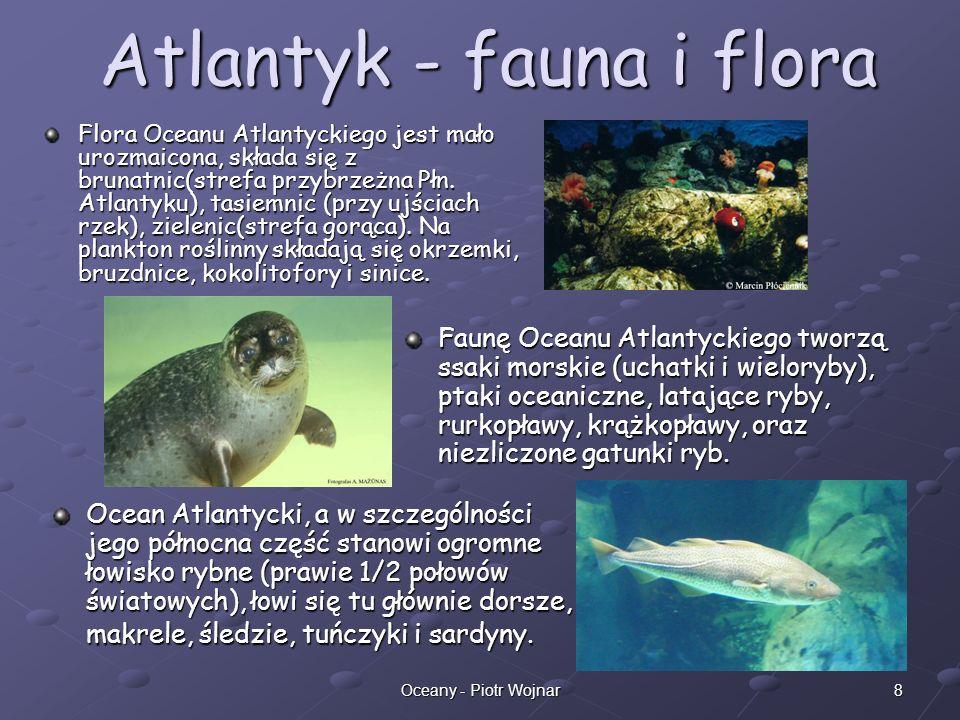 Atlantyk - fauna i flora
