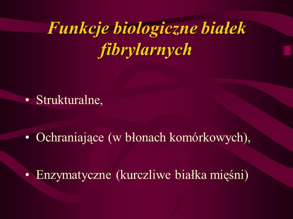 Funkcje biologiczne białek fibrylarnych