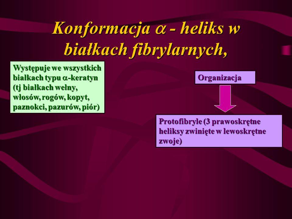 Konformacja  - heliks w białkach fibrylarnych,