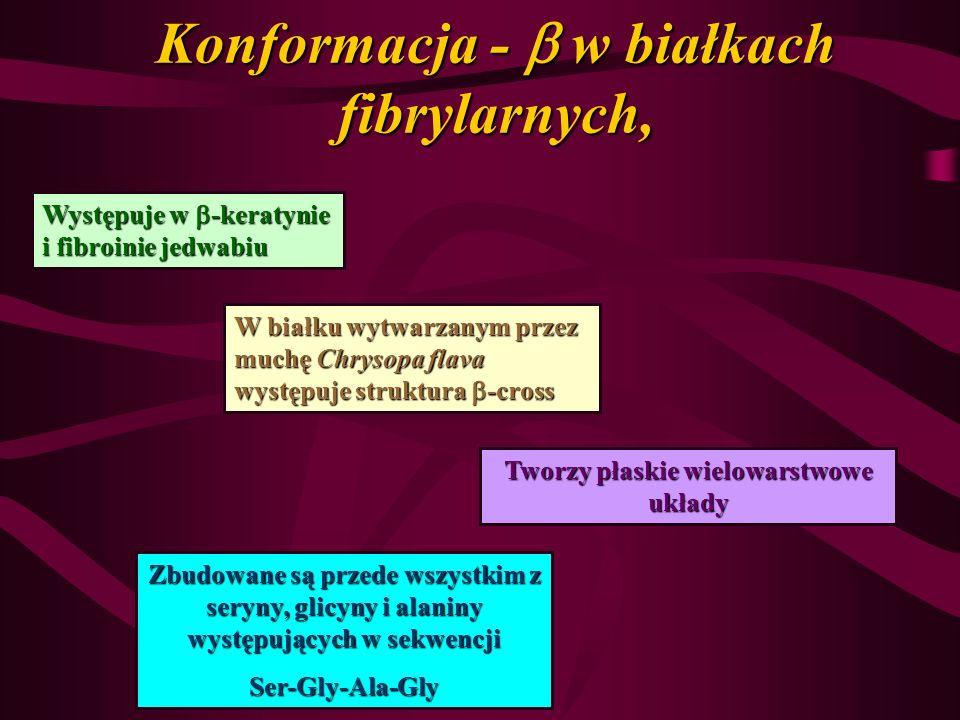 Konformacja -  w białkach fibrylarnych,