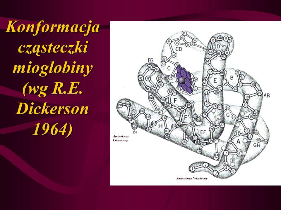 Konformacja cząsteczki mioglobiny (wg R.E. Dickerson 1964)