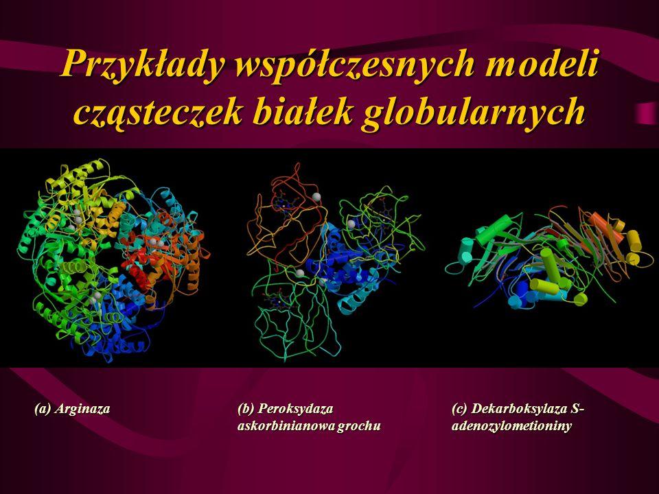 Przykłady współczesnych modeli cząsteczek białek globularnych