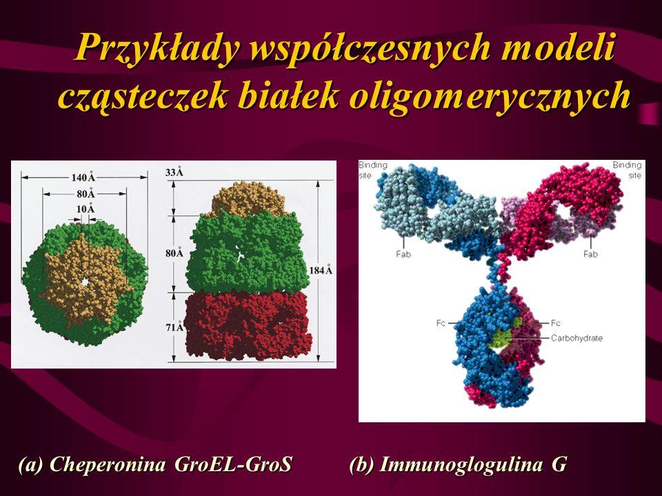 Przykłady współczesnych modeli cząsteczek białek oligomerycznych