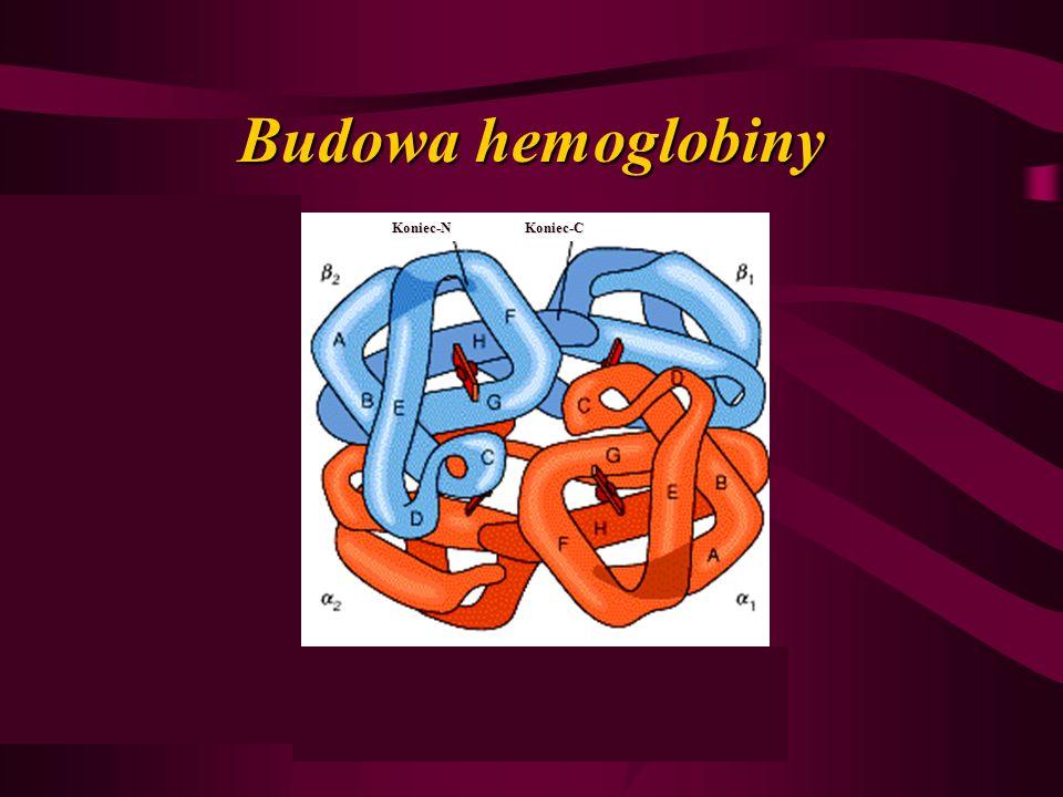 Budowa hemoglobiny Koniec-N Koniec-C