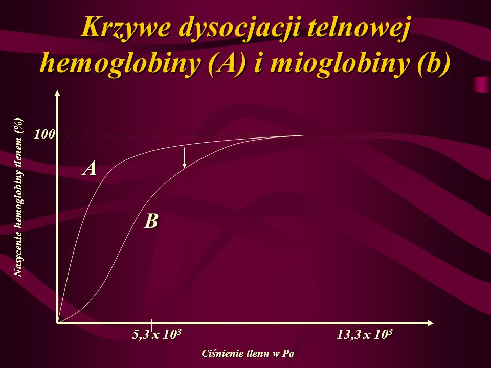 Krzywe dysocjacji telnowej hemoglobiny (A) i mioglobiny (b)