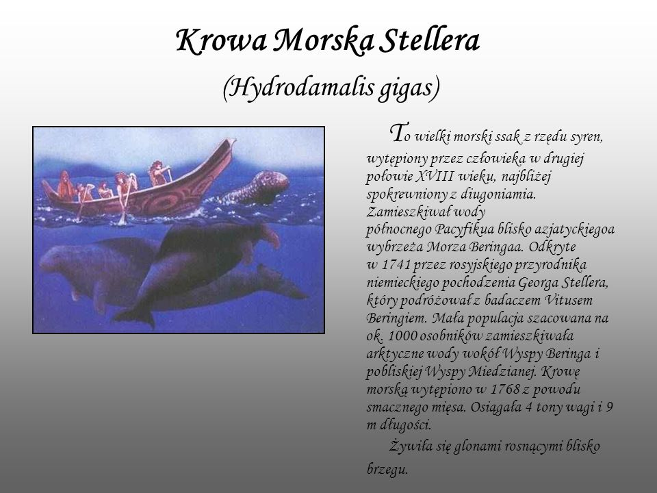 Krowa Morska Stellera (Hydrodamalis gigas)