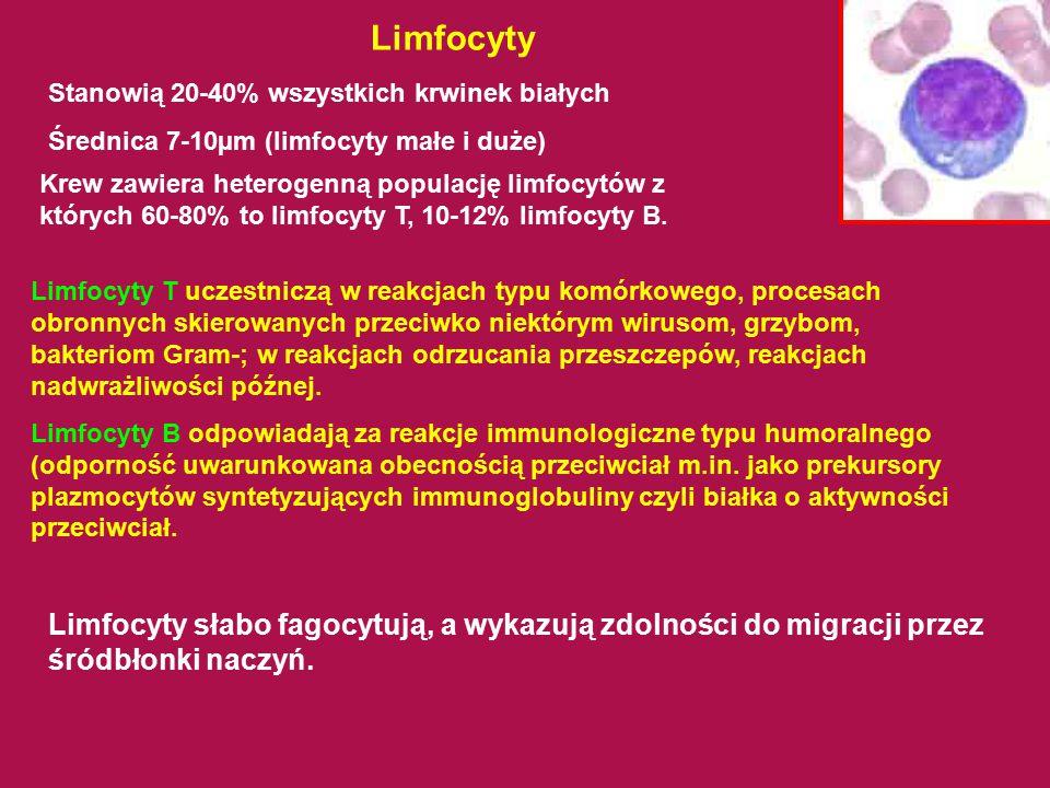 Limfocyty Stanowią 20-40% wszystkich krwinek białych. Średnica 7-10µm (limfocyty małe i duże)
