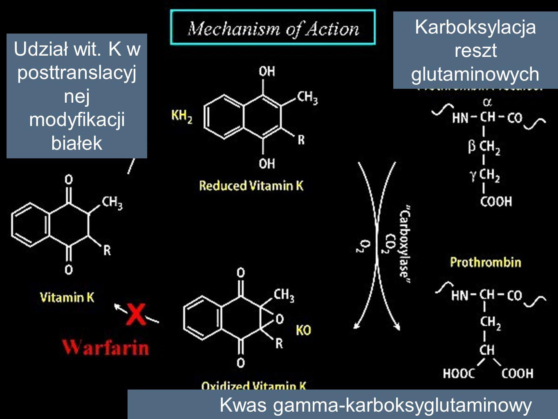 Karboksylacja reszt glutaminowych