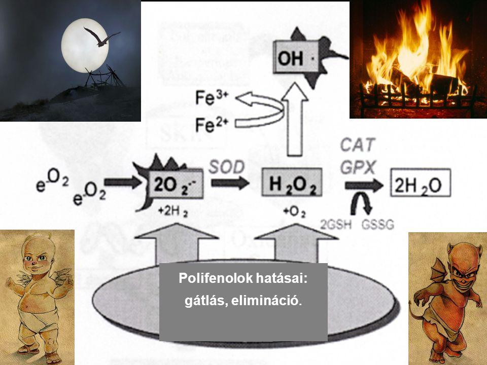 Polifenolok hatásai: gátlás, elimináció.