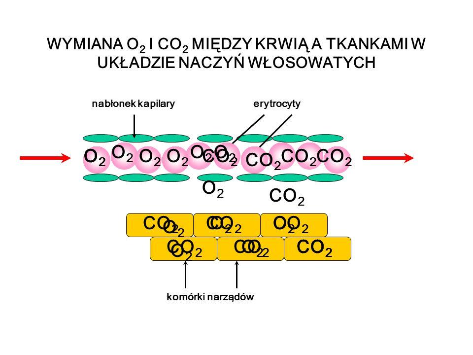 WYMIANA O2 I CO2 MIĘDZY KRWIĄ A TKANKAMI W UKŁADZIE NACZYŃ WŁOSOWATYCH