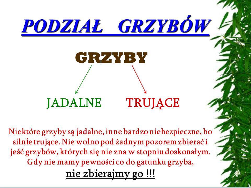 PODZIAŁ GRZYBÓW GRZYBY JADALNE TRUJĄCE nie zbierajmy go !!!