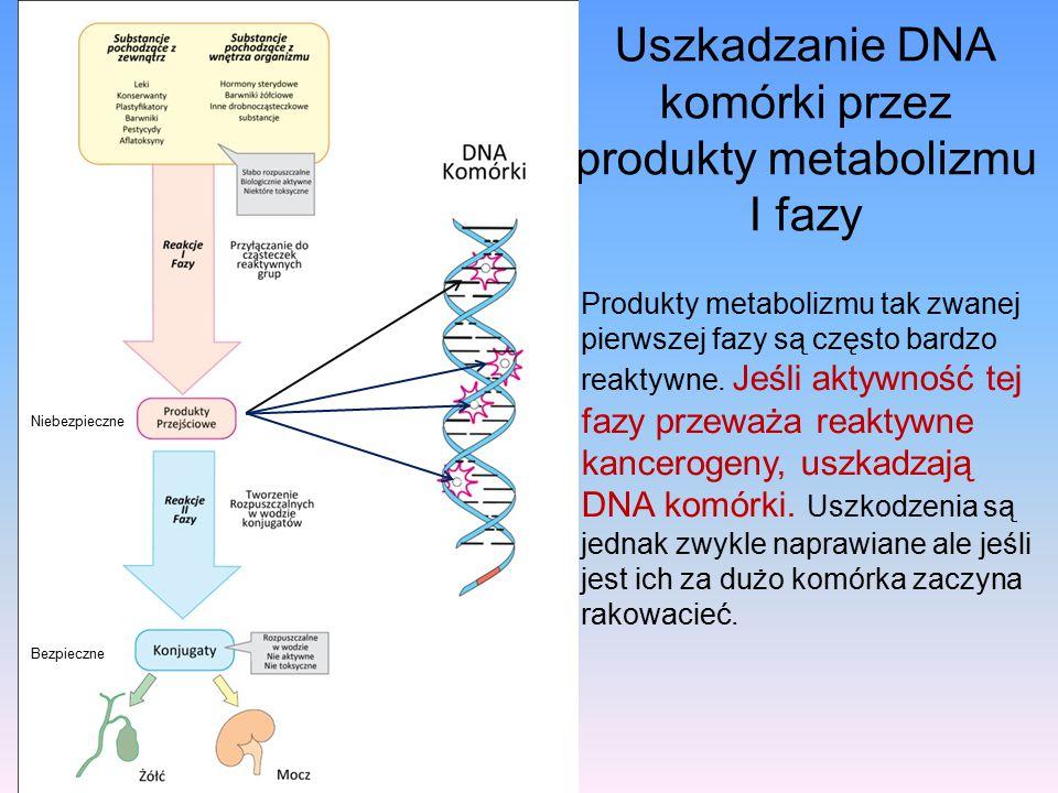 Uszkadzanie DNA komórki przez produkty metabolizmu I fazy