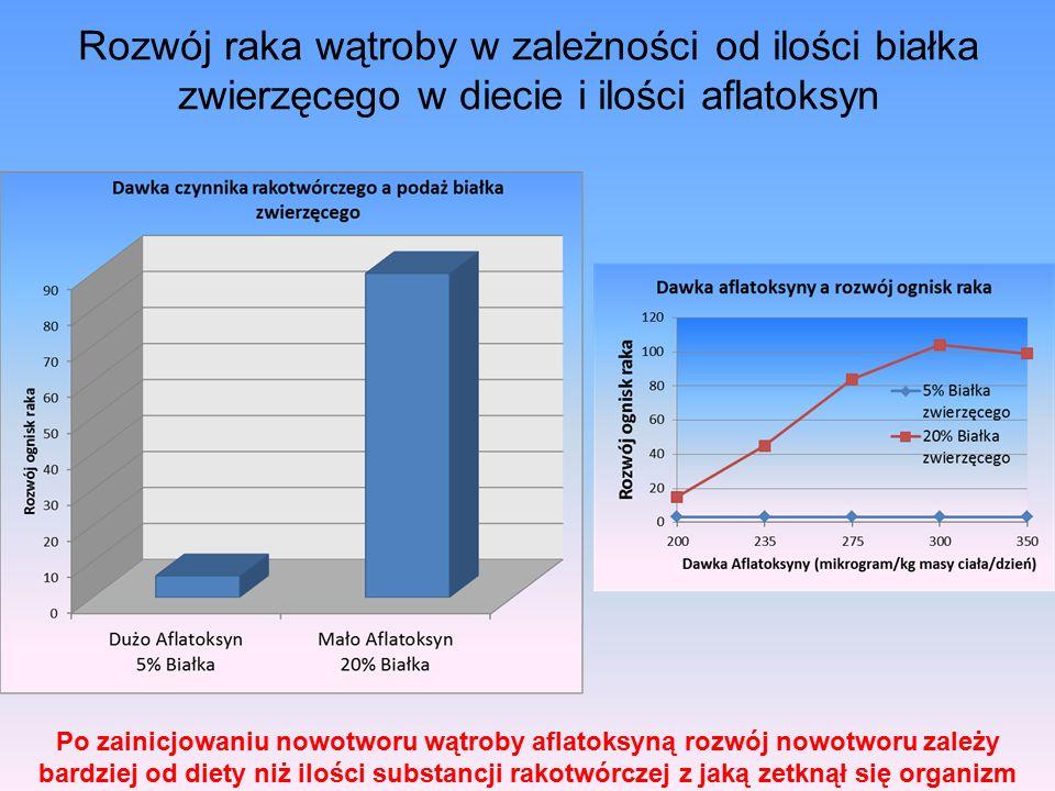 Rozwój raka wątroby w zależności od ilości białka zwierzęcego w diecie i ilości aflatoksyn