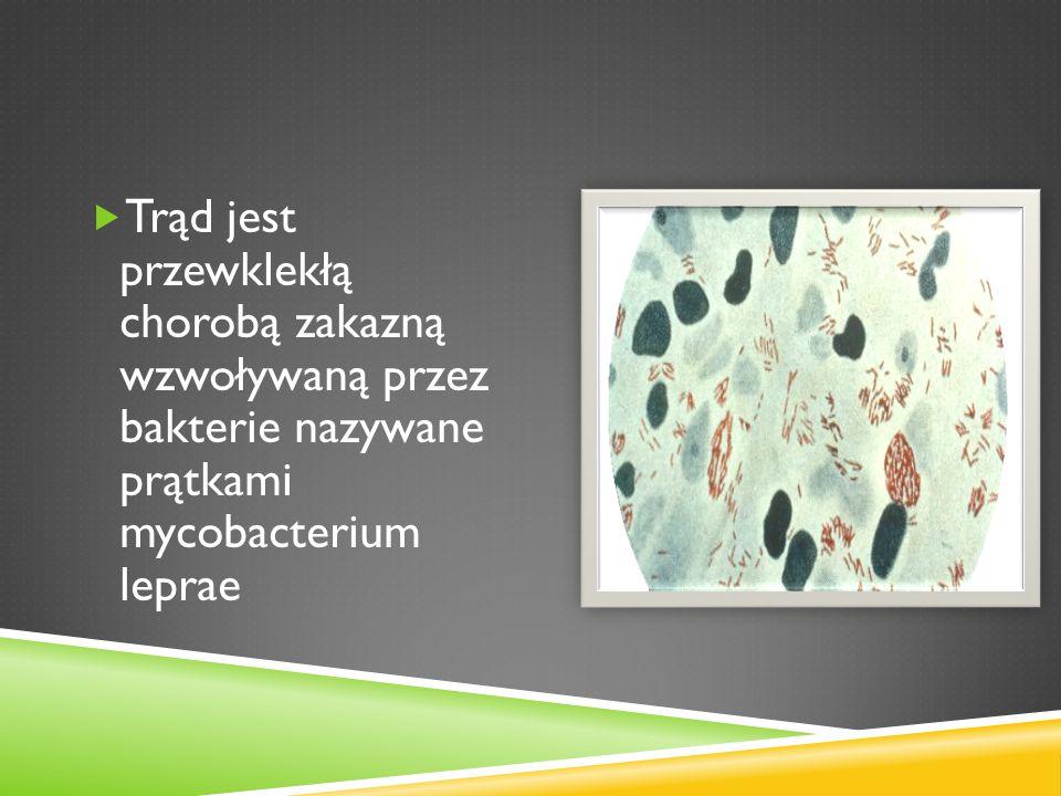 Trąd jest przewklekłą chorobą zakazną wzwoływaną przez bakterie nazywane prątkami mycobacterium leprae