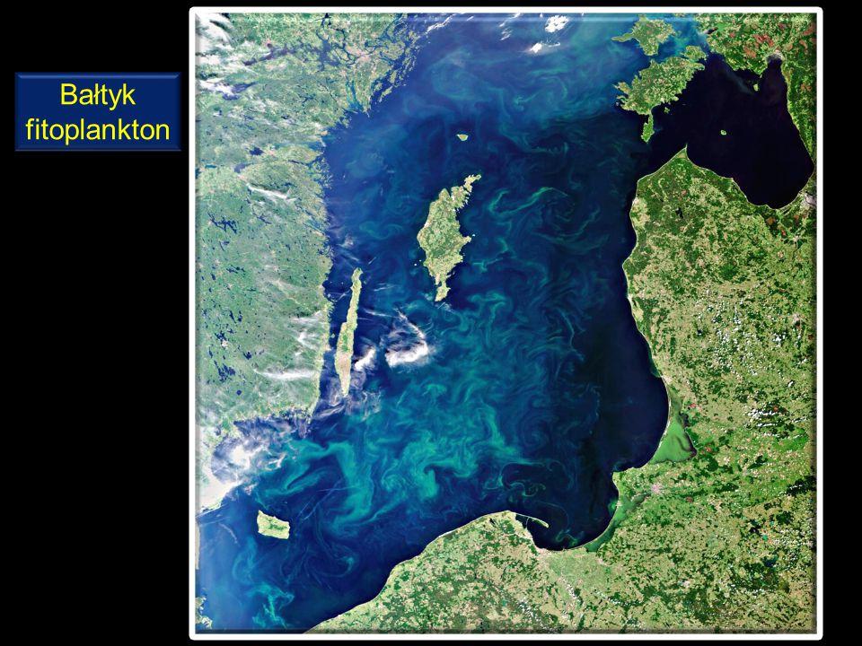 Bałtyk fitoplankton