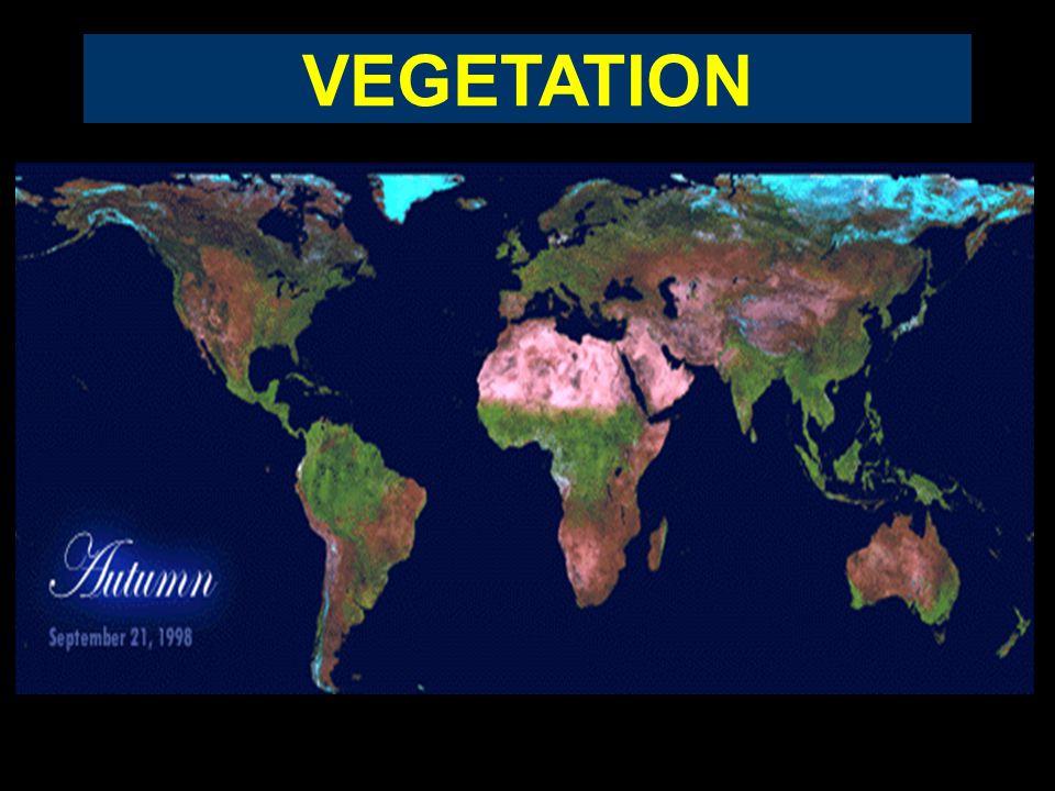 VEGETATION Instytut Geografii i Gospodarki Przestrzennej